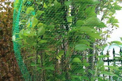Mocna siatka przeciw ptakom 35g 10x50m